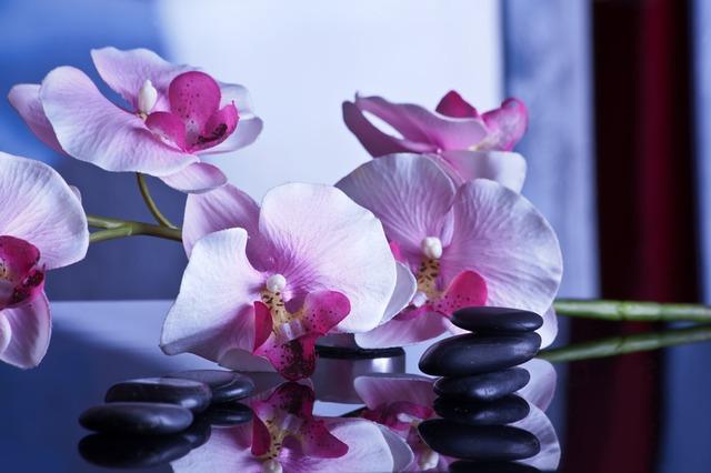 květiny, černé kamínky