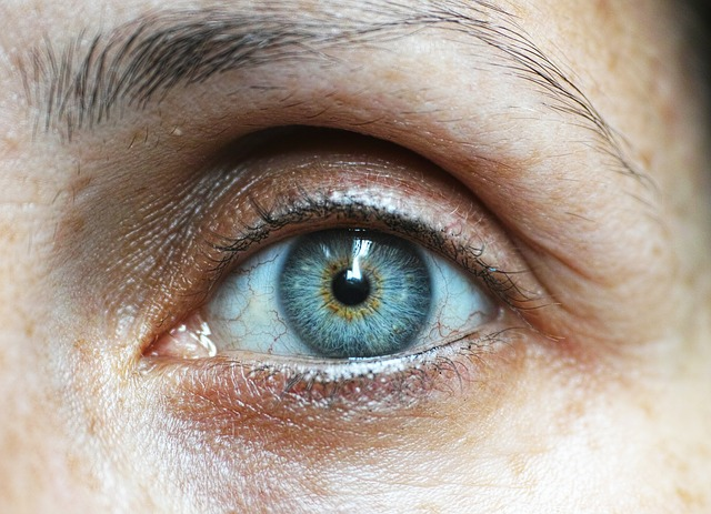 lidské oko.jpg